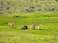 Running Ibex