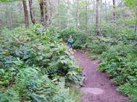 Mt Arab Trail