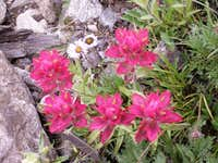 Flowers near Gray's