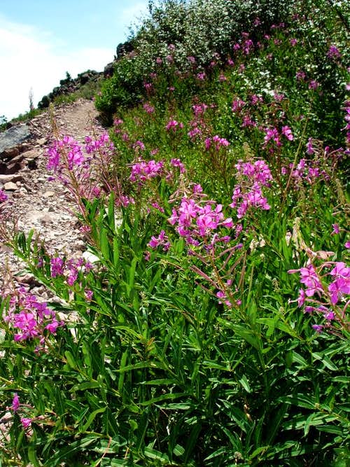 More wildflowers