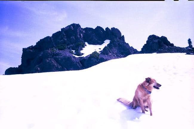 Radek and Shirley's dog,...