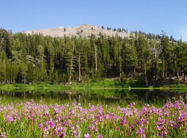 Summit Lake Shooting Stars