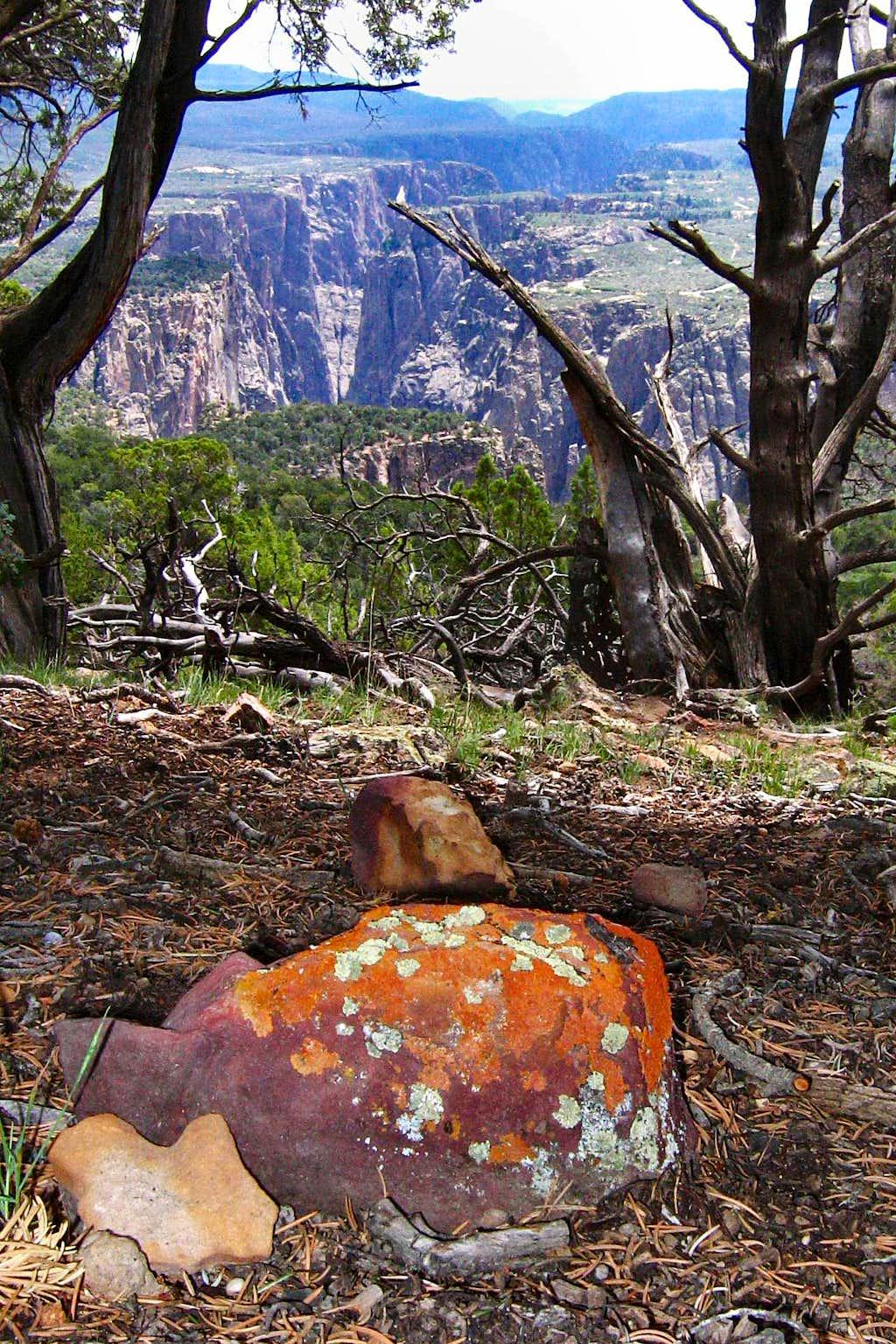 Lichens on Black Canyon of the Gunnison North Rim