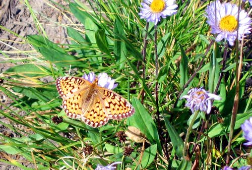 Wind River Butterflies
