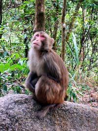 Monkey near Lion Rock, Hong Kong