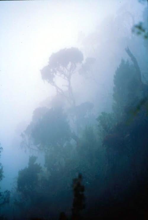 Fog and Trees, Mubuku Valley
