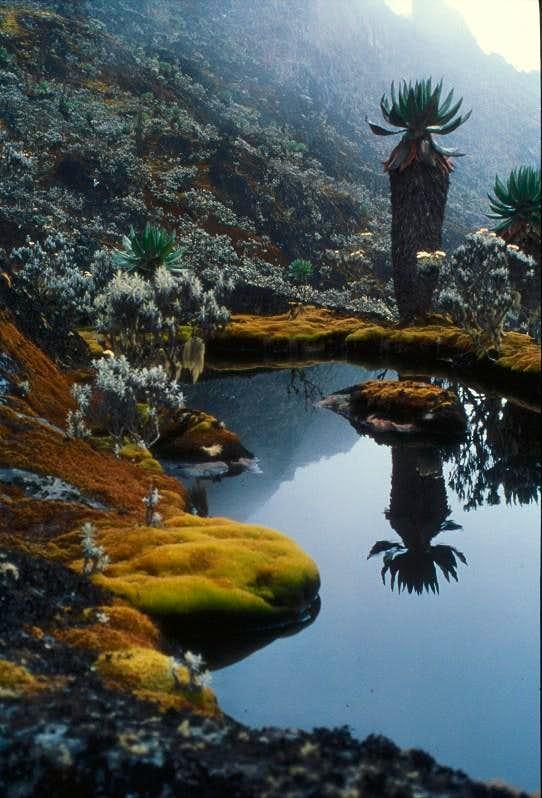 Small Pond, Slopes of Mt. Baker