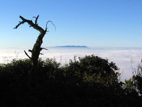 Mt Tamalpais seen from the summit Montara Mountain