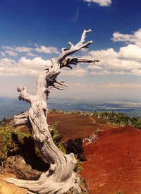 An interesting tree at the summit