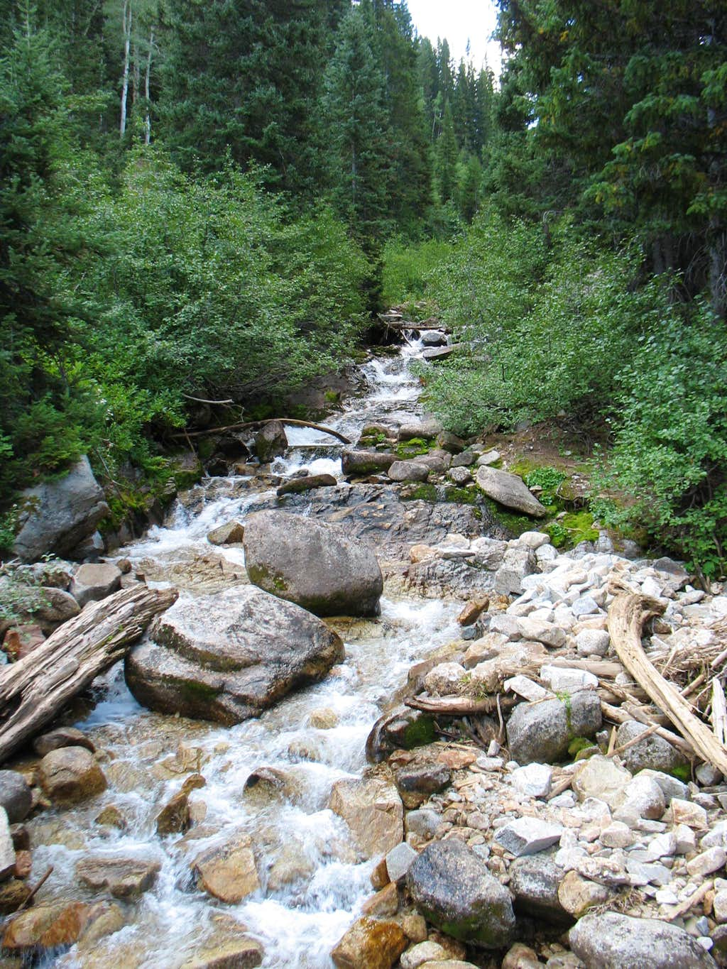 Stream by Red Pine Trail