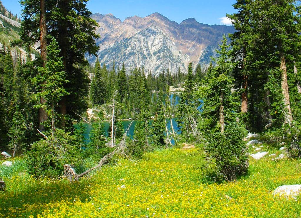 Wildflowers above Red Pine Lake