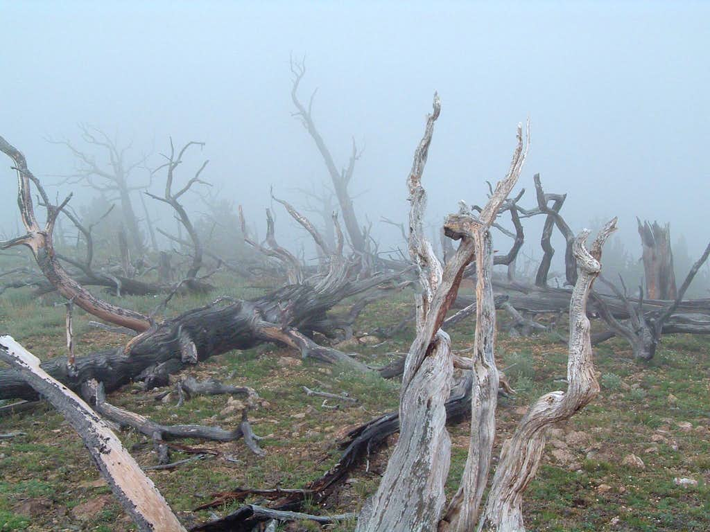 Haunting Bald near Carbonate Peak