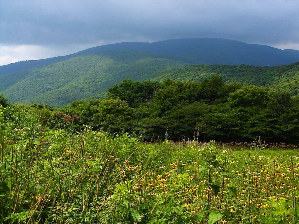 Grassy Ridge from Yellow Mountain Gap