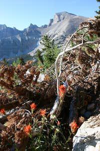 Wheeler Peak and Indian Paintbrush