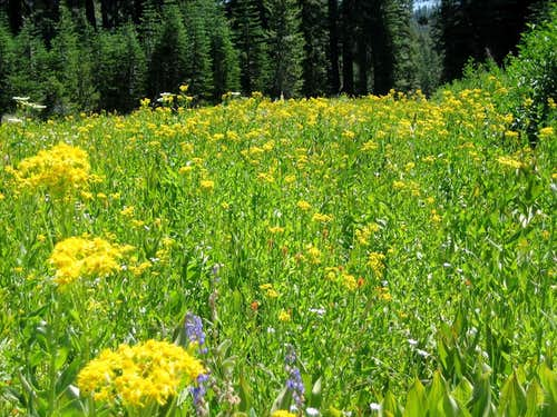 Meadow along road to Castle Pass