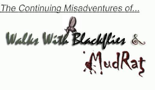 Continuing Misadventures
