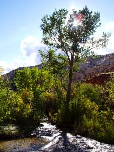 Cottonwood on Calf Creek