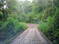 driving in the rainforest was amazing!