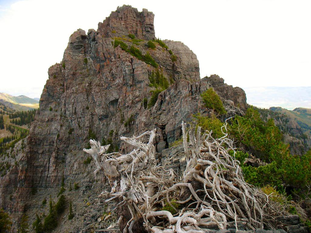 Dead Bush/Tree below West Summit