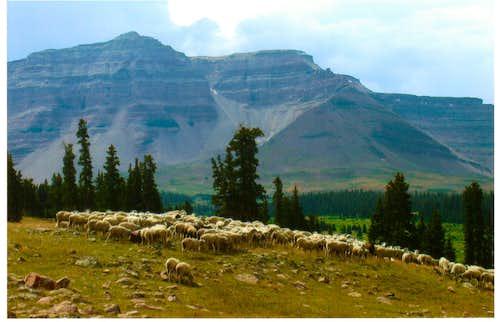 Kings Peak Wilderness?