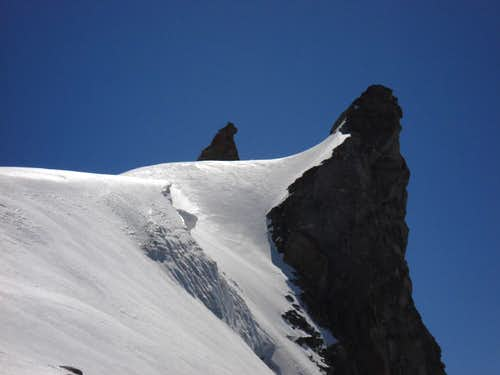 """Sharks"" on Gran Paradiso slopes"