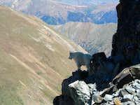 Moutain Goat on Mt Edward