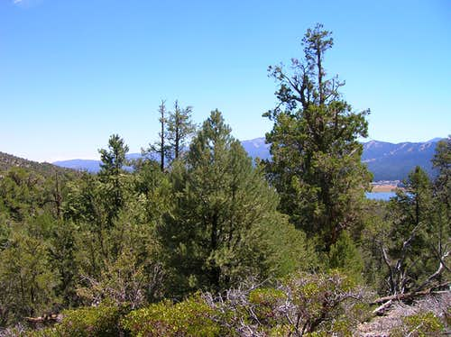 Cougar Crest Trail and Big Bear Lake