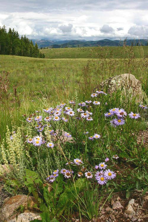 Mountain Meadow and Flowers