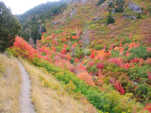 Fall colors on Y Mountain trail