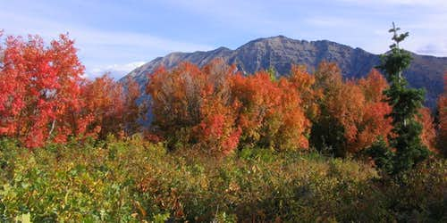 Fall colors in front of Cascade Mountain
