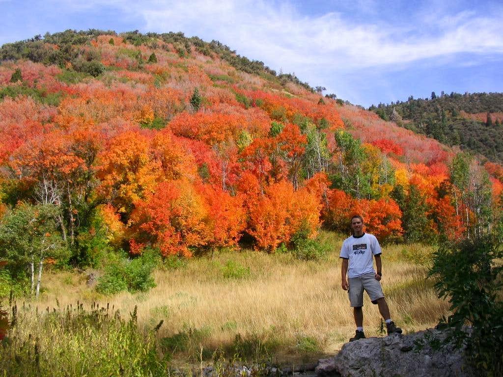 Bright Fall Colors