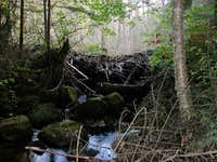 Beaver Dam on S. Notch Trail