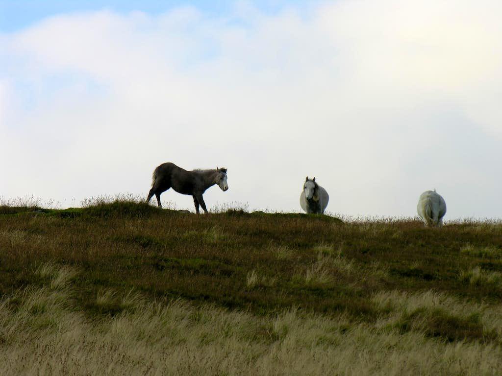 Wild pones below Carnedd Llywellyn