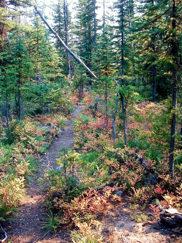 Little St Joe Trail