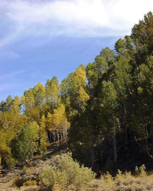 Aspens in Cottonwood Creek Basin