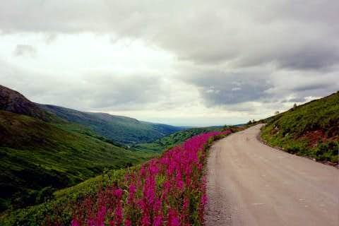 Fireweed along the Hatcher Pass Road