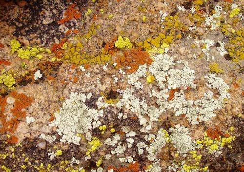 Lichen in the Desert
