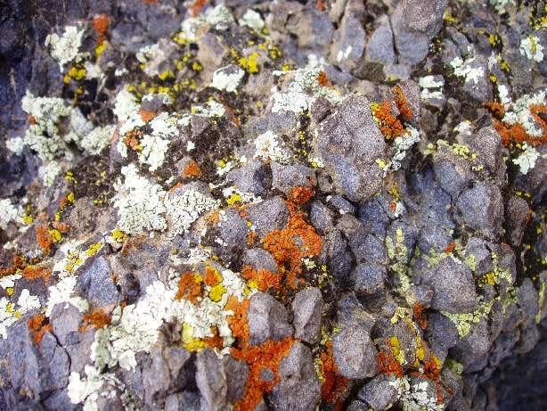 Mojave Desert Lichen