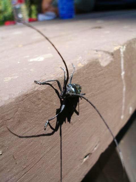 Long-horned Beetle staring me down