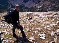 Mountain Wildlife
