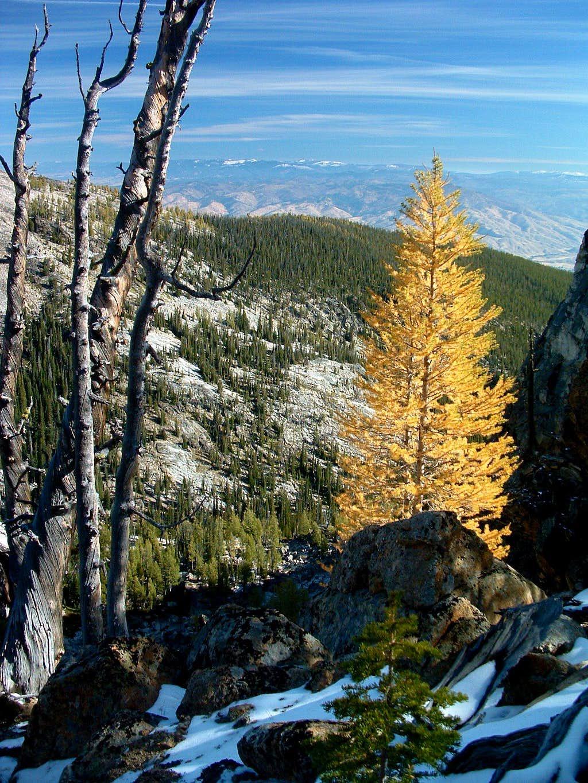 Alpine Growth