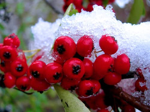 fruits and the snow