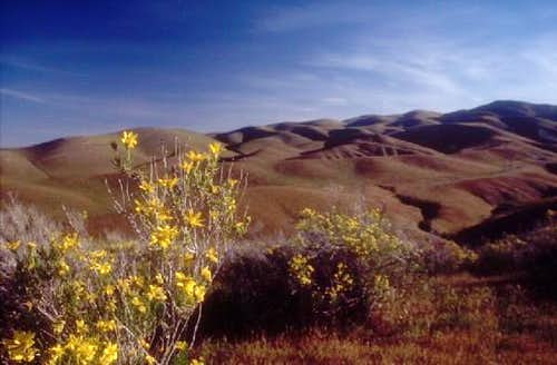 Brown hills and yellow flowers