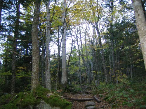 some of the trees along the way
