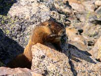 It's even to early for the marmot