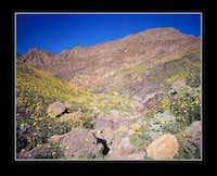 Death Valley Limestone Wildflower Canyon