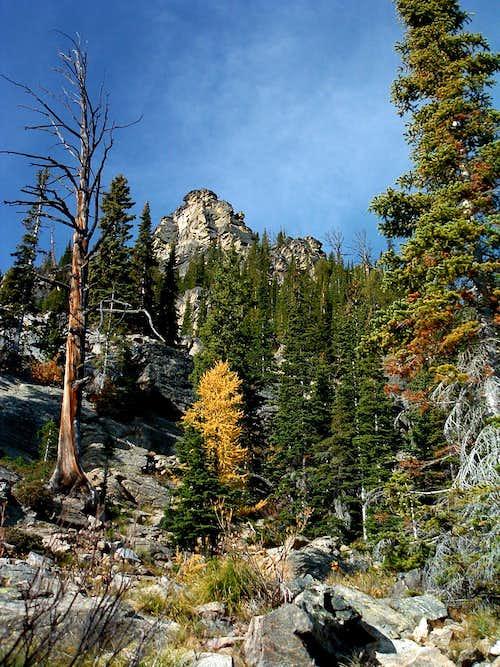 Larch Along Trail