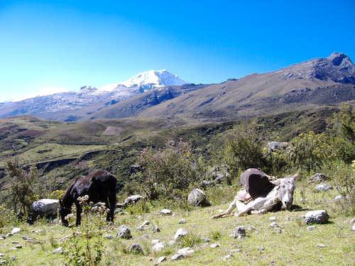 Ishinca to Collon Trail Head, Tired Donkey, Copa Background