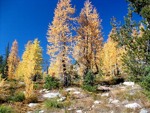 Larch Near Summit Approach