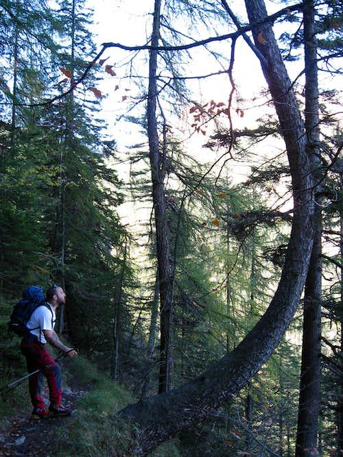 Dolomiti del Brenta-ai piedi del Croz dell' Altissimo